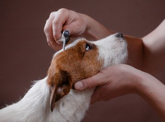 pet-grooming-3-optimise